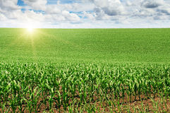 Sunrise over the  field Royalty Free Stock Photography