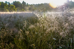 Sunrise over a field with dew. Summer sunrise over a field with dew Royalty Free Stock Photography