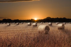 Sunrise over field Stock Images
