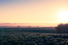 Sunrise over field Royalty Free Stock Photography