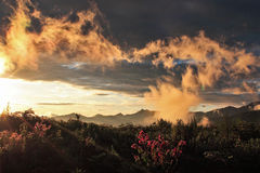 Sunrise over flowery mountains Stock Images