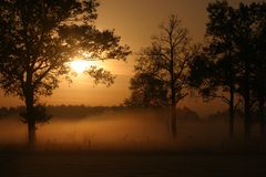 Sunrise over foggy meadow. With silhouetted trees Royalty Free Stock Image