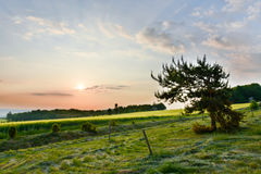Sunrise over forest. Royalty Free Stock Photos