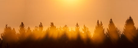 Sunrise over the forest Stock Images