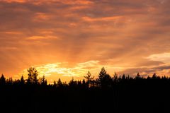 Sunrise over forest sun rays Stock Images