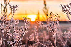 Sunrise over a frozen field. Beautiful sunrise over a frozen field royalty free stock photos