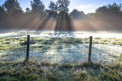 Sunrise over Grassland with lots of Dew Stock Image