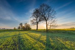 Sunrise over green field Stock Images