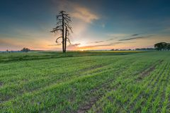 Sunrise over green field Royalty Free Stock Images