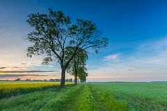 Sunrise over green field Royalty Free Stock Photo