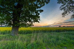 Sunrise over green field Royalty Free Stock Photography