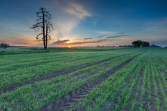 Sunrise over green field Stock Photos