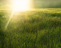 Sunrise over a green field Royalty Free Stock Image