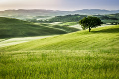 Sunrise over the green fields in Tuscany Stock Photography
