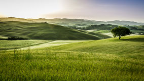 Sunrise over the green fields in Tuscany Stock Images