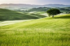 Sunrise over the green fields in Tuscany Royalty Free Stock Image