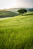 Sunrise over the green fields in Tuscany Stock Image