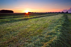 Sunrise over green haymaking Royalty Free Stock Photography