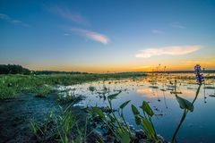 Sunrise over green marshy wetlands stock image