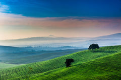 Sunrise over a green valley in Tuscany Stock Photo