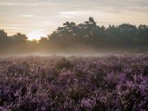 Sunrise over hazy heathland Stock Photo