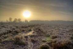 Sunrise over frosty heath Stock Photography