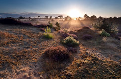 Sunrise over heather meadows Stock Photography