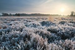 Sunrise over heathland during frosty morning Royalty Free Stock Photo