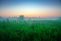 Sunrise over the high green grass. The Tver country. Sunny summer morning, July. Beautiful landscape. Agricultural landscape in th Stock Photography
