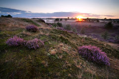Sunrise over hills with heather Royalty Free Stock Photos