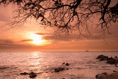 Sunrise over the Horizon of the Sea with Silhouette Tree Branch, Stock Photos