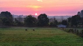 Sunrise on farm Royalty Free Stock Photo