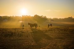 Sunrise Over Horses Royalty Free Stock Photo