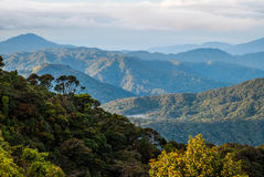 Sunrise over jungle in cameron highlands, Malaysia Royalty Free Stock Images