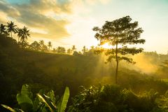 Sunrise over jungle Stock Images