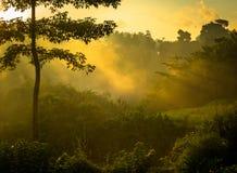 Sunrise over jungle Royalty Free Stock Photos