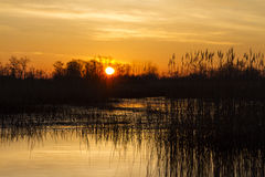 Sunrise over the lake with cane Stock Images