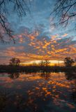 Sunrise over the lake with reflection of bare trees in the water. Royalty Free Stock Images