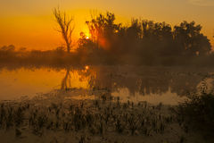 Sunrise over the lake with reflection of bare trees in the water. Royalty Free Stock Photos