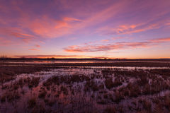 Sunrise Over the Marsh Stock Image
