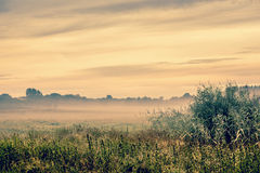 Sunrise over a misty field Stock Images