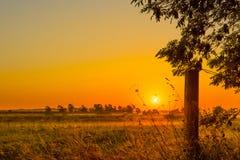 Sunrise over a misty field Stock Image