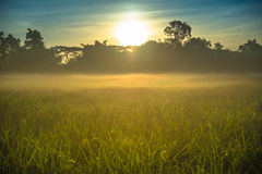 Sunrise over the misty field Stock Image