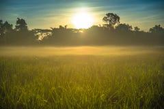 Sunrise over the misty field Stock Image