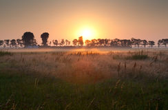 Sunrise over misty meadow Stock Photos