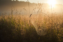 Sunrise over the misty meadow Royalty Free Stock Photography