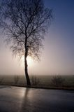 Sunrise over misty moor Royalty Free Stock Image
