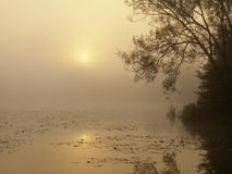 Sunrise over a misty pond Stock Photography
