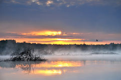 Sunrise over misty pond Royalty Free Stock Photos