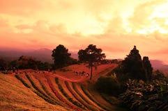 Sunrise over mountain range. At Hua Nam Dang National Park, Chiang Mai, Thailand stock photos